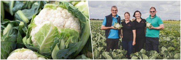 H&P Ashcroft - Cauliflower With over five generations of farming heritage
